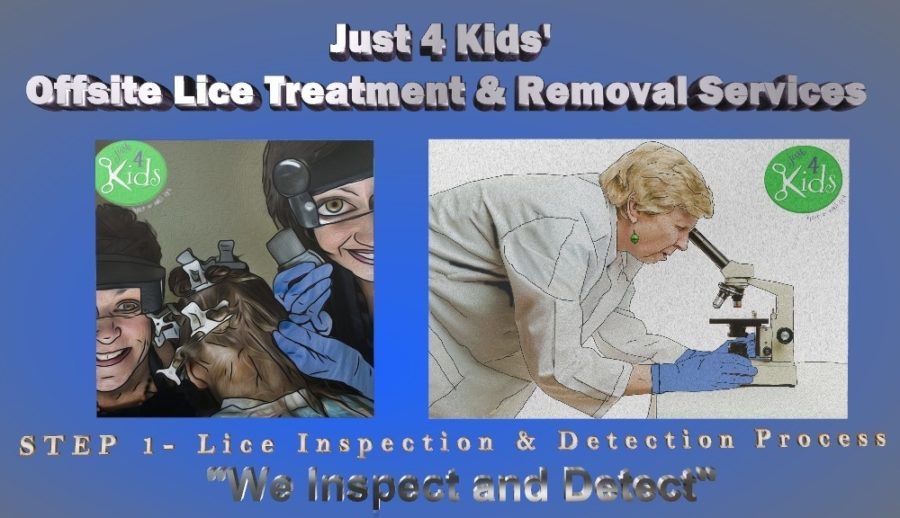 Just 4 Kids Salon Lice Science - Lice Treatment and Removal Services - Step 1 - We Inspect and Detect